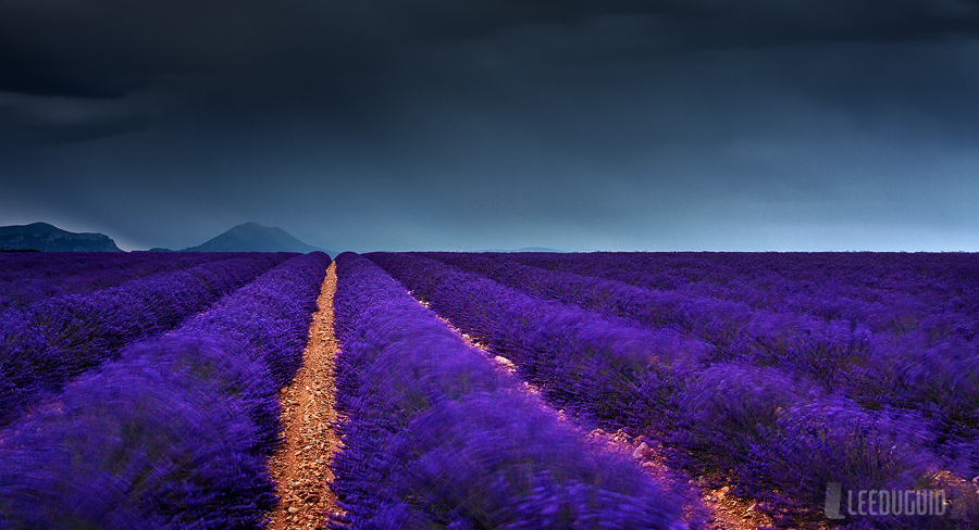 Lavender field near Valensole, France