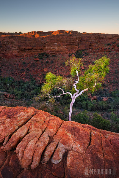 Kings-Canyon-Australia-04130580