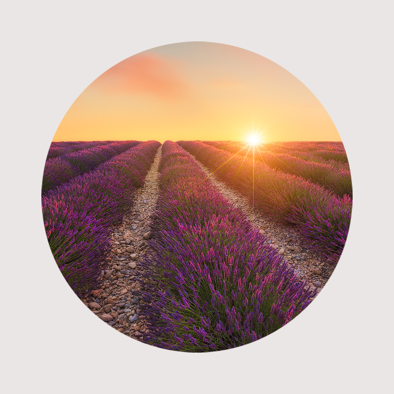 Lavender Circular photo